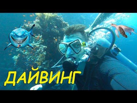 ДАЙВИНГ в Египте/Первое погружение/Diving in Egypt/Шарм-ель-Шейх/первый опыт