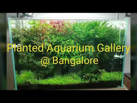 South India's one of the best planted Aquarium Gallery @ Bangalore