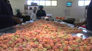 The dried fruit factory process