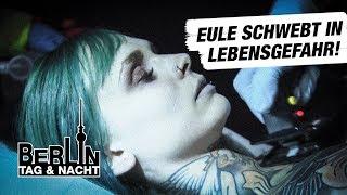 Eule kämpft um Leben und Tod #1814 | Berlin - Tag & Nacht