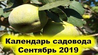 Календарь садовода сентябрь 2019 года. Почему нужно обработать кремниевым раствором растения сада?