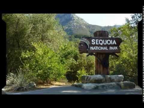 The Giants of Sequoia