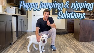 Puppy jumping and nipping solutions