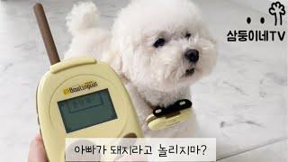 강아지 번역기 써봤더니.. 통역되는말 보고 기겁할뻔 했…