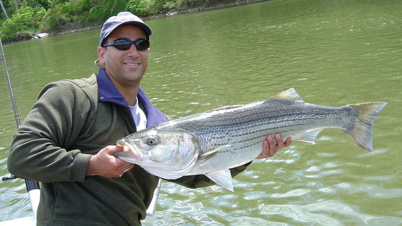 Fishing for stripers on the upper tidal potomac river for Potomac river fishing report