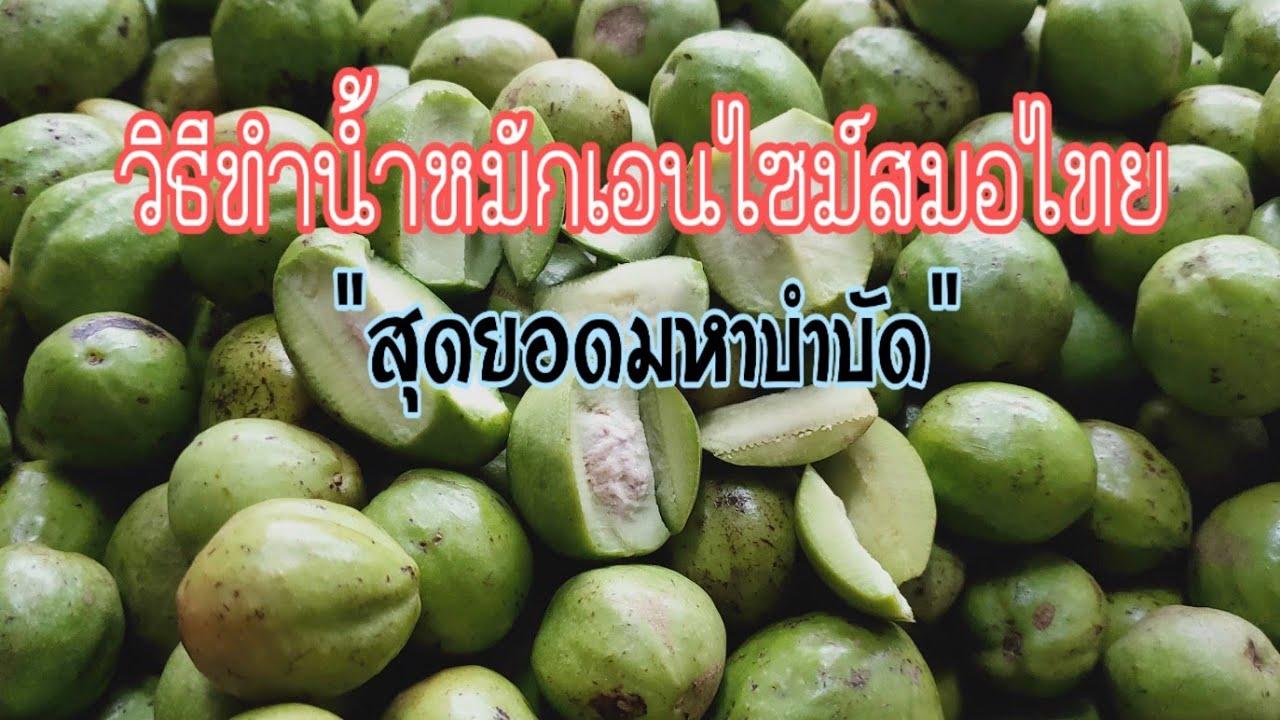 วิธีทำน้ำหมักเอนไซม์สมอไทย #น้ำหมักสมอ #ประโยชน์สมอไทย #สมอไทย #จุลินทรีย์