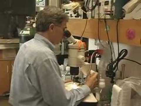Understanding Embryonic Stem Cells Part 1 of 6