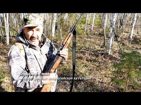 Западно-сибирская лайка. Часть 1. Охота на бурого медведя в ХМАО-Югре.