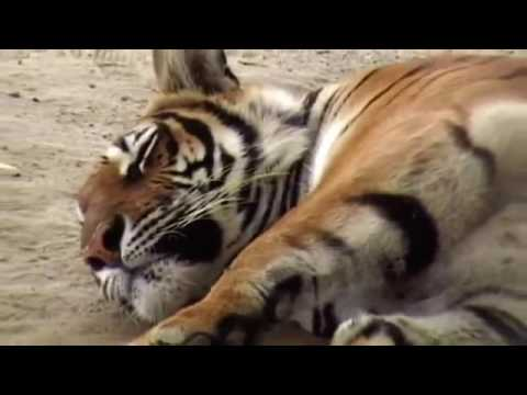 The Paw Project HD 2015