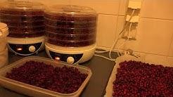 Puolukka-Puolukan kuivaaminen/säilöntäohje-tyttebær