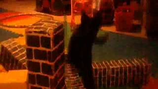 Catzilla, King of the Felines! Trailer