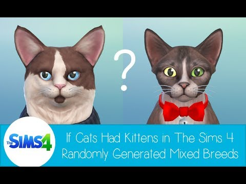 If Cats had Kittens in The Sims 4 - Randomly Generated Mixed Breeds