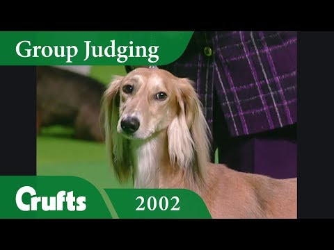 Saluki wins Hound Group Judging at Crufts 2002