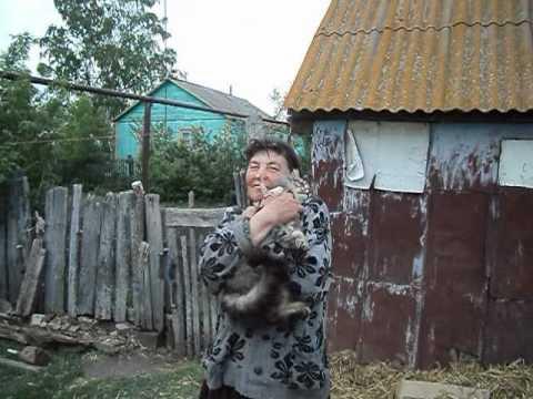 Кошкин дом(диктор-Алексей Семиврагов)
