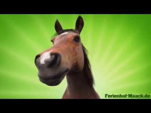 Alles Gute Zum Geburtstag Mit Pferdegruss Youtube