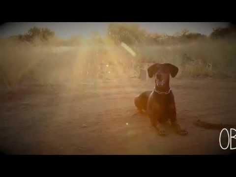 Dog sport training Namibia