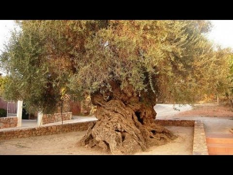 7 Most Unique Trees In The World