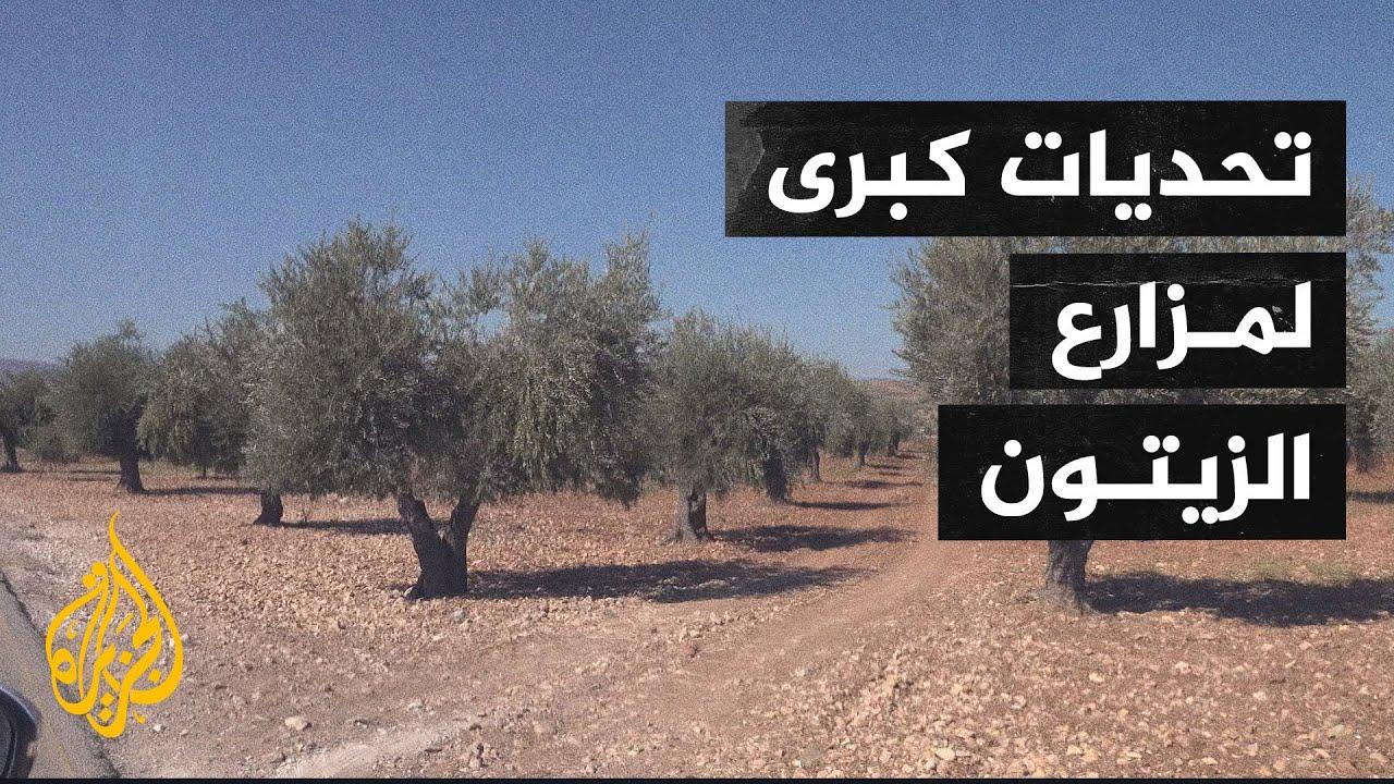 تحديات جمة تواجه مزارعي الزيتون في سوريا  - نشر قبل 2 ساعة