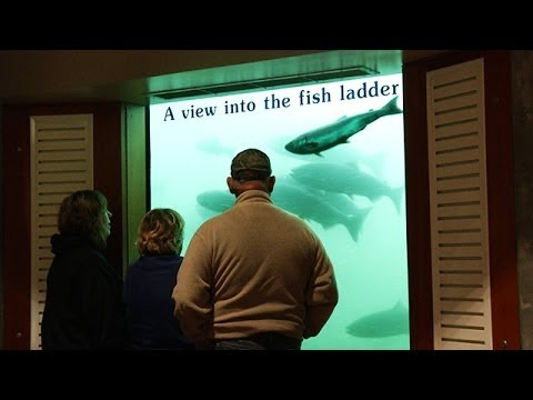 Mcnary dam salmon count for Bonneville dam fish counts 2017