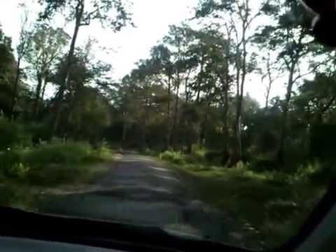 Drive thru Rajiv Gandhi National Park, Nagarhole