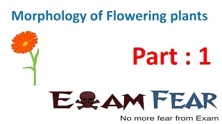Biology Morphology of Flowering Plants part 1 (Introduction) CBSE class 11 XI