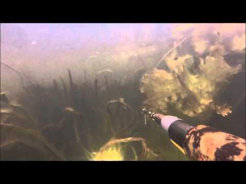 места для подводной охоты в калининградской области