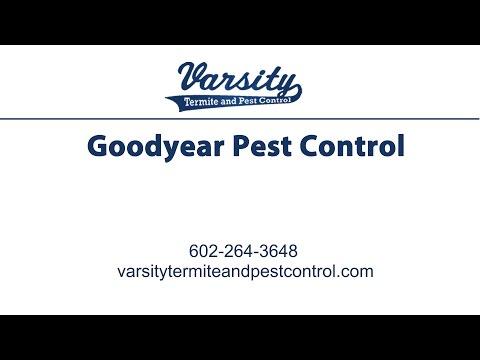 Goodyear Pest Control | Varsity Termite & Pest Control