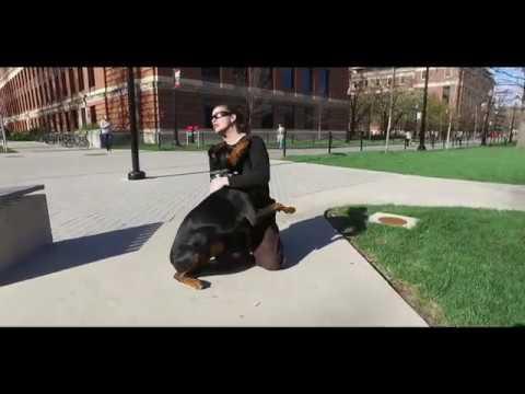 Best Dog Training in Columbus, Ohio! 10 Month Old Doberman, Max!