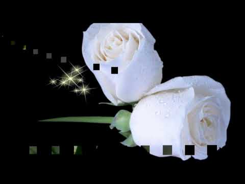 ♥✿ White roses! . ‿ . (Nikos Ignatiadis music) ... [ Original title - i love you ] ♥✿