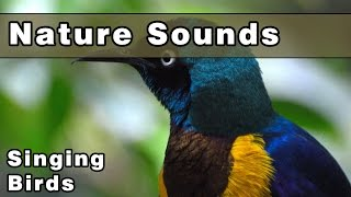 SINGING BIRDS Nature Sounds - 12 Hours - Sounds of Nature - Gracefully Relax and Unwind