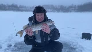 Рыбалка в Волоколамском районе Ловля щуки на жерлицы Зимняя рыбалка