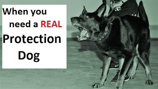 HOW to Train a Real Protection Dog (K91.com)