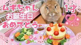 うさぎムギちゃん1才の誕生日 thumbnail