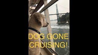 Service Dog On A Cruise!!  Alaska Day 1