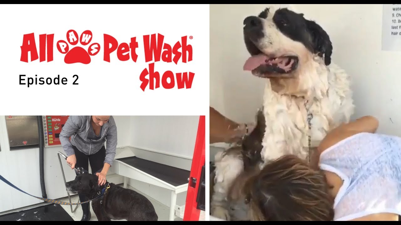 Self-Serve Pet Wash Videos | All Paws Pet Wash