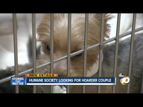 More than 100 Yorkies soon up for adoption