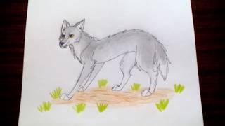 уроки рисования 7  Как нарисовать волка  Рисуем легко и просто  Волк  #17