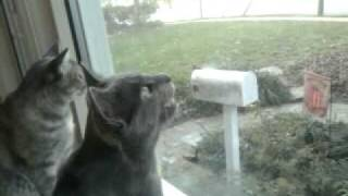 Cat makes clicking sound while staring out window
