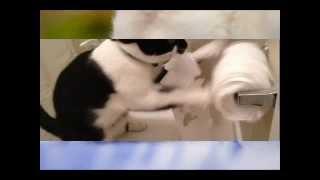 Прикольные картинки кошек