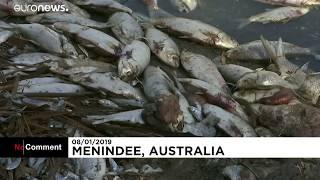 Avustralya'da Balık Katliamı