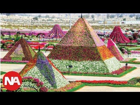 Conoce el Increíble Jardín de Flores en Medio del Desierto de Dubai