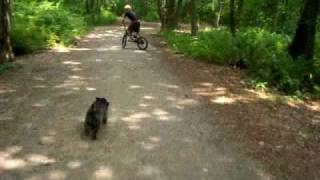 Max The Cairn Terrier Likes To Run