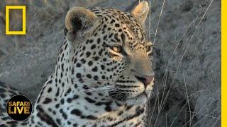 Safari Live - Day 238   National Geographic