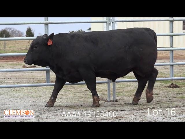 Clemson Extension Bull Test Lot 16