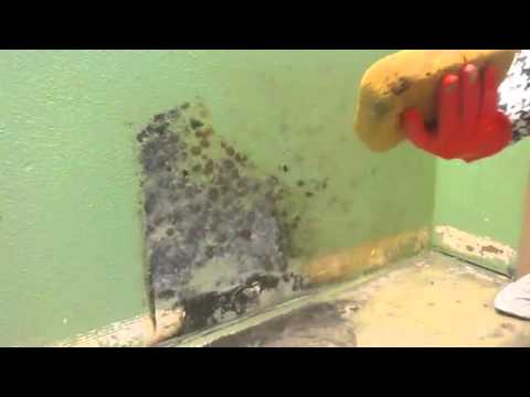Instant Mold Stain Cleaning on Drywall
