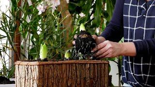 http://tv.ucoz.pl/dir/ogrodnictwo/luty_w_ogrodzie_kalendarz_ogrodnika_na_01_02_07_02_prace_ogrodnicze_w_lutym/4-1-0-307