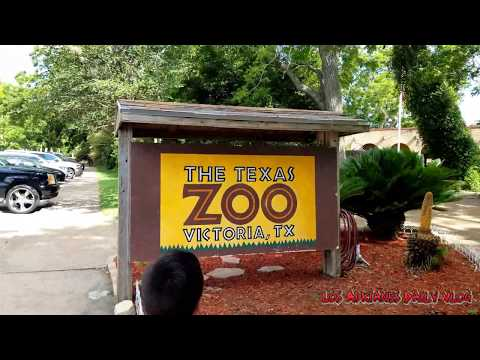 The Texas Zoo In Victoria Texas