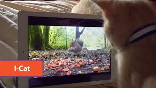 Kitten Confused By iPad