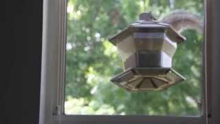 Squirrel jumping onto feeder then falling off