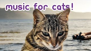 The BEST Cat Music - Soft Melodies Just for Felines!